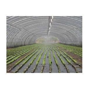 Paillage salade 1m50