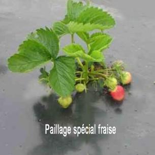 Paillage spécial fraise 1m00