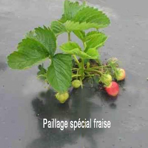 Paillage spécial fraise